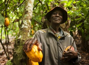Cocoa farmers get a fair deal from fair trade companies